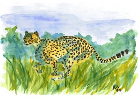 Gepardi_n